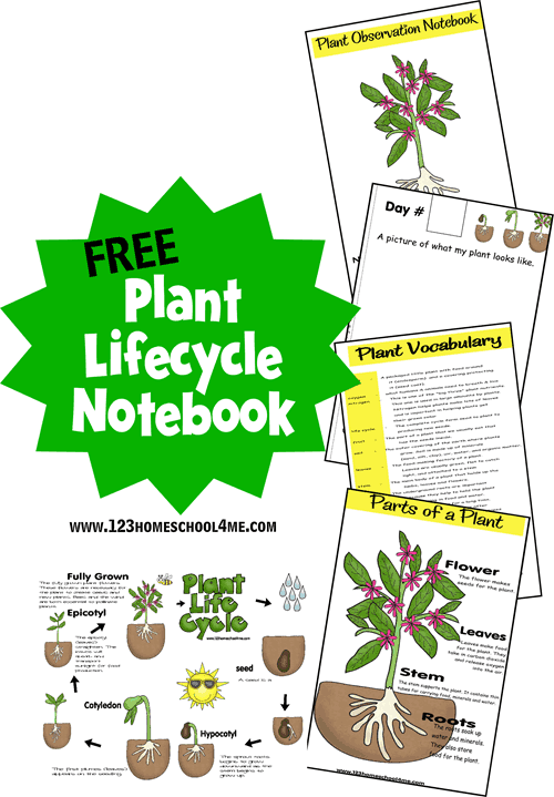 50 Free Educational Printables for Spring